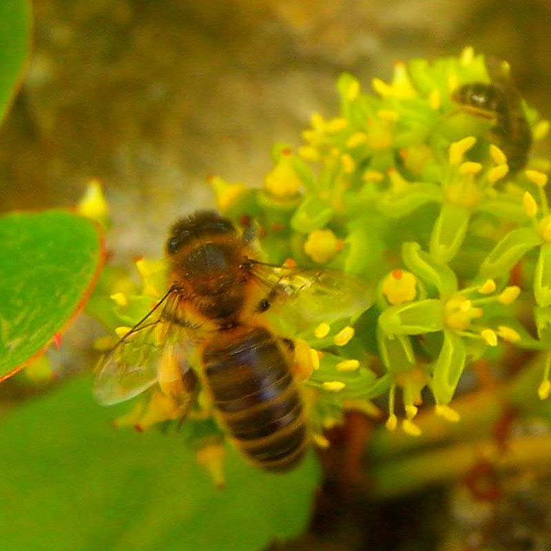Photo abeille