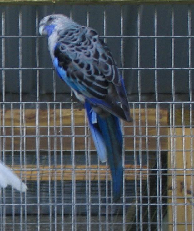blue_c10.jpg