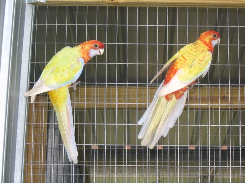vogels10.jpg
