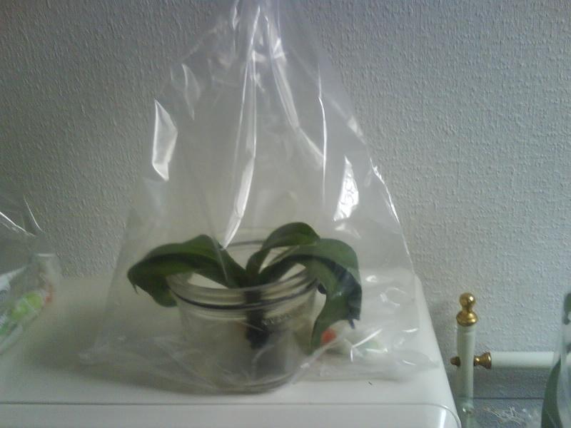 sac plastique hermétique