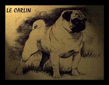 LeCarlin